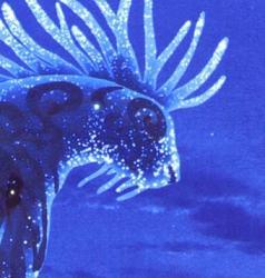 Le Dieu Cerf avatar du personnage de Princesse Mononoké